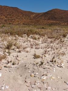 Oysters, Flowers, Desert