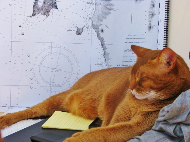Chief Navigator and Trouble-Maker