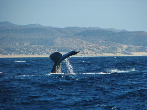 Frailes to Cabo San Lucas